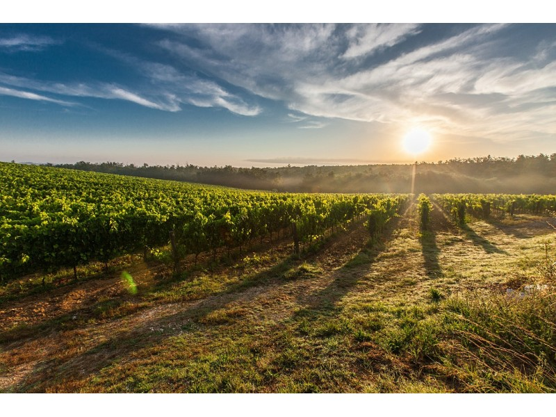 96% OF THE VINEYARD SURFACE AREA IN SPAIN IS IN THE TERRITORY OF A QUALITY DESIGNATION OF ORIGIN.