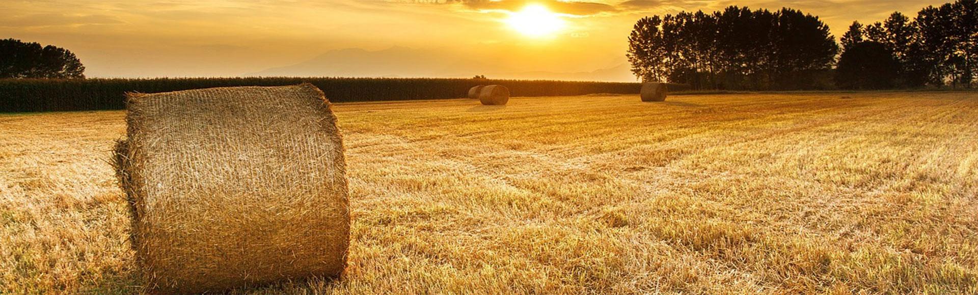 En Hibema te ofrecemos una amplia gama de arados y cultivadores para cualquier potencia de tractor, con la seguridad de consumir un mínimo esfuerzo y una duración que le sorprenderá
